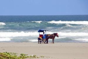 Kuda Di Pantai Parangtritis