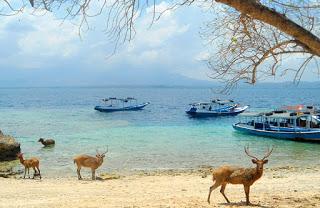 Menjangan Island, Paradise Diving Perfect In Bali