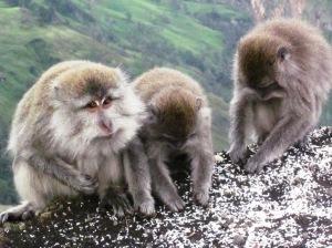Fauna Mount Rinjani